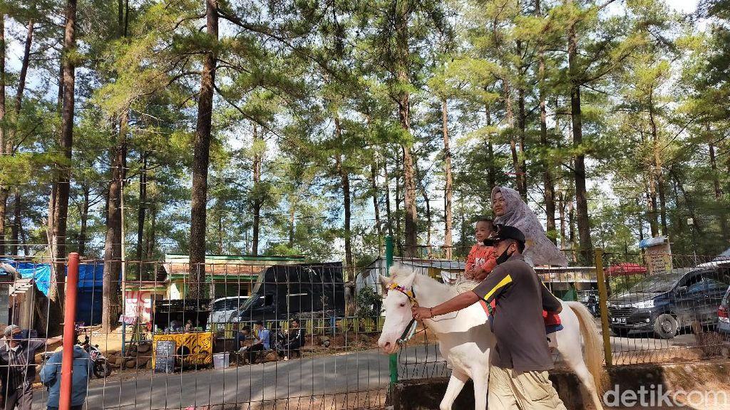 Foto: Berkuda Menjelajahi Sejuknya Hutan Pinus Malino, Mau?