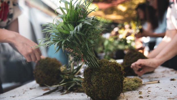 Group of people learning ornamental gardening with Kokedama Japanese technique