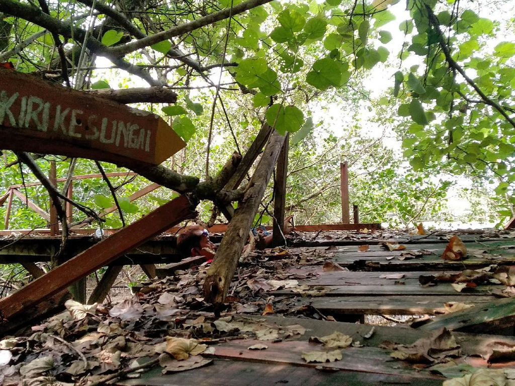 Jembatan Mangrove Pangandaran Terbengkalai, Wisatawan Kecewa