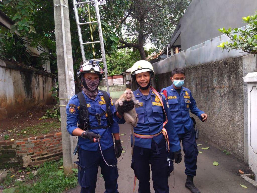 Damkar Jaktim Evakuasi Monyet yang Terlilit Tali di Tiang Listrik