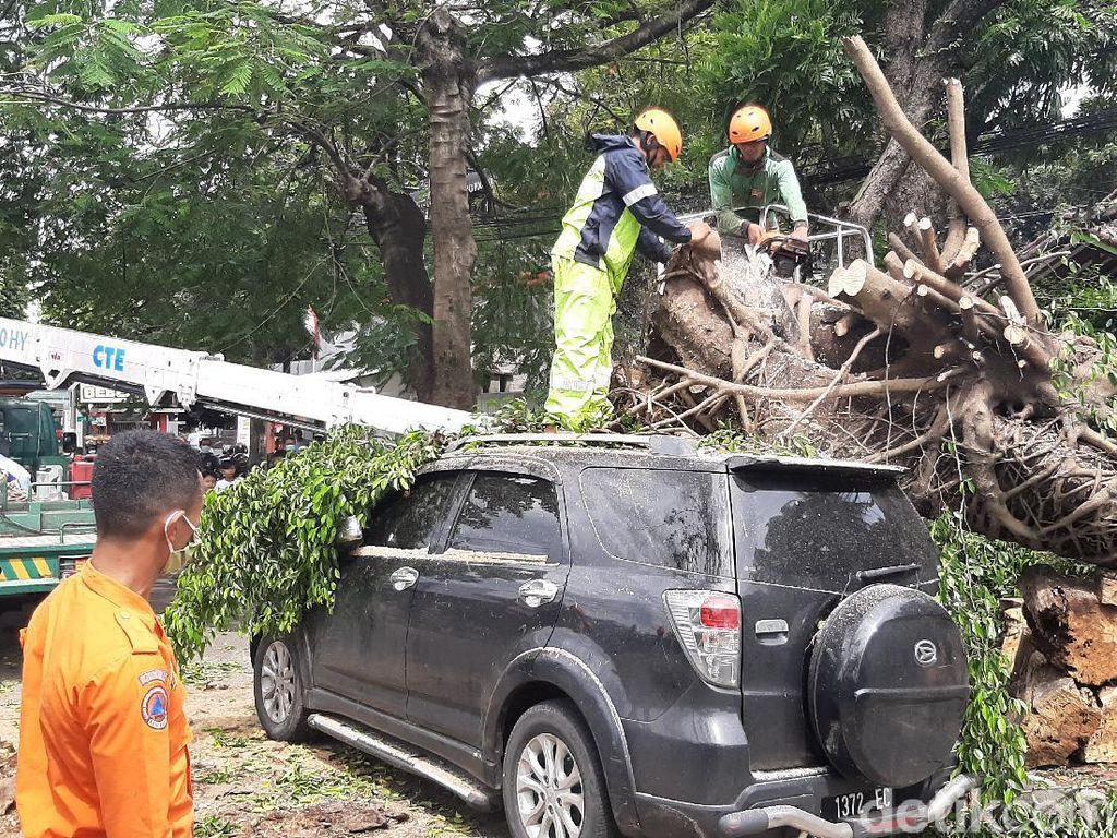 3 Kendaraan Rusak dan 4 Orang Luka Tertimpa Pohon Tumbang di Bogor