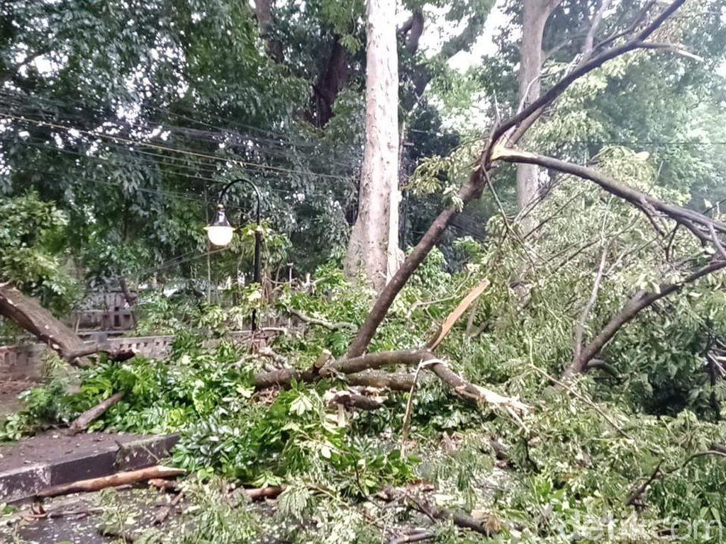 Dua Orang Terluka Akibat Tertimpa Pohon Tumbang di Bogor