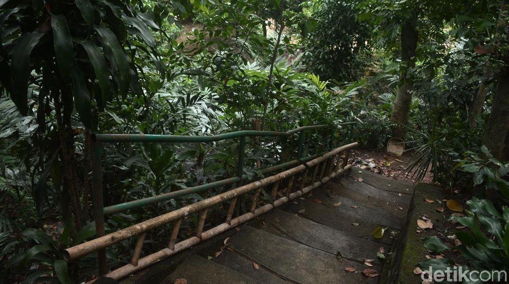 Potret Ciliwung Condet yang Direncanakan Jadi Destinasi Wisata