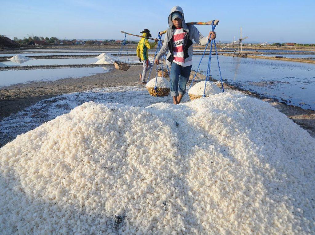 Garis Pantai RI Panjang Tapi Masih Impor Garam, Ini Biang Keroknya
