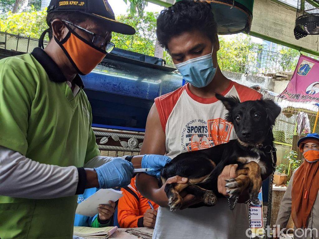 Vaksinasi Rabies Digencarkan di Jakarta