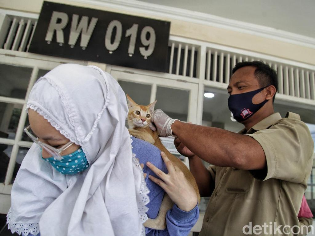 Pemkot Jakut Gencar Suntik Vaksin Rabies