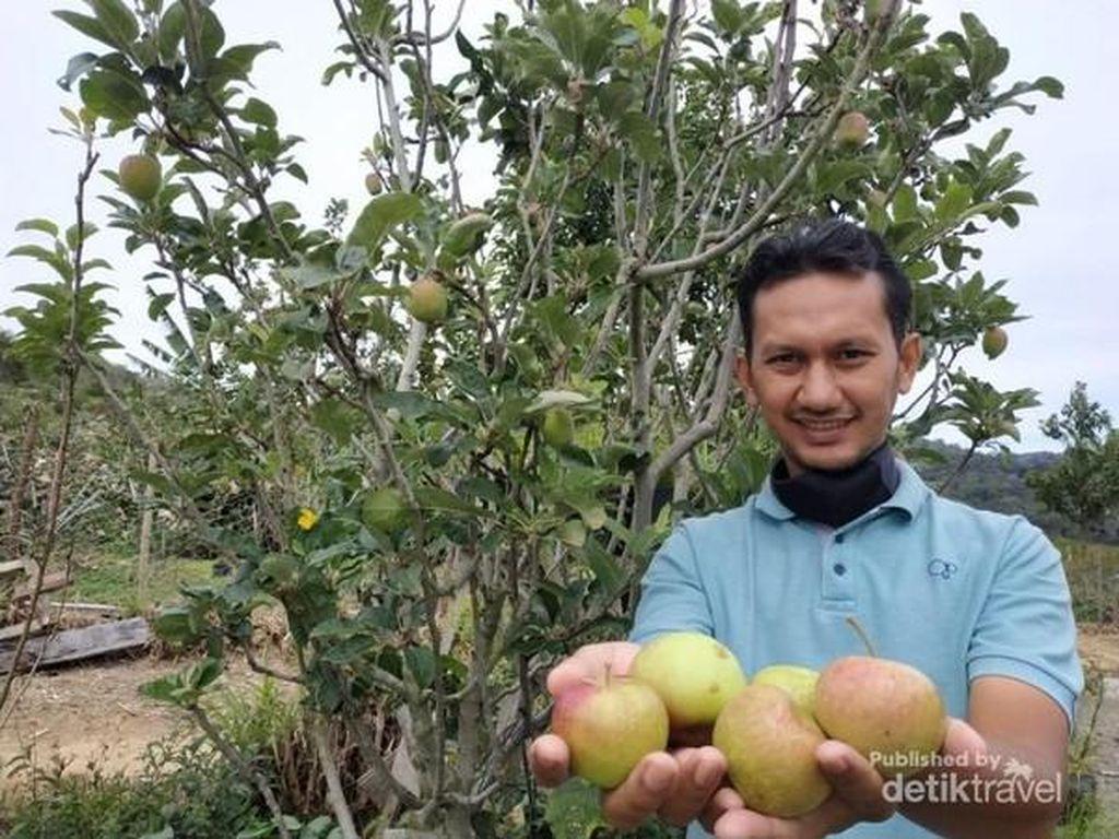 Bukan Cuma Kopi, Aceh Juga Punya Kebun Apel