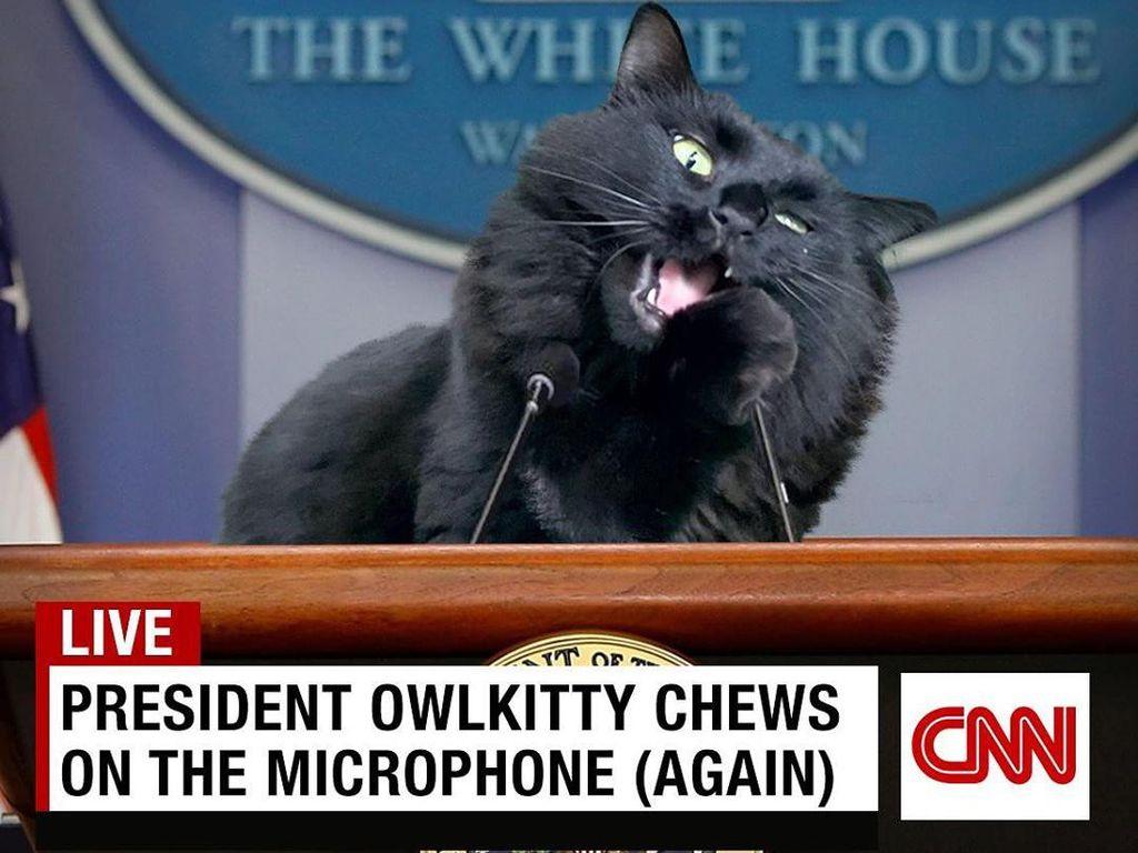 Kucing Hitam Ini Saingi Trump dan Biden di Pemilu AS