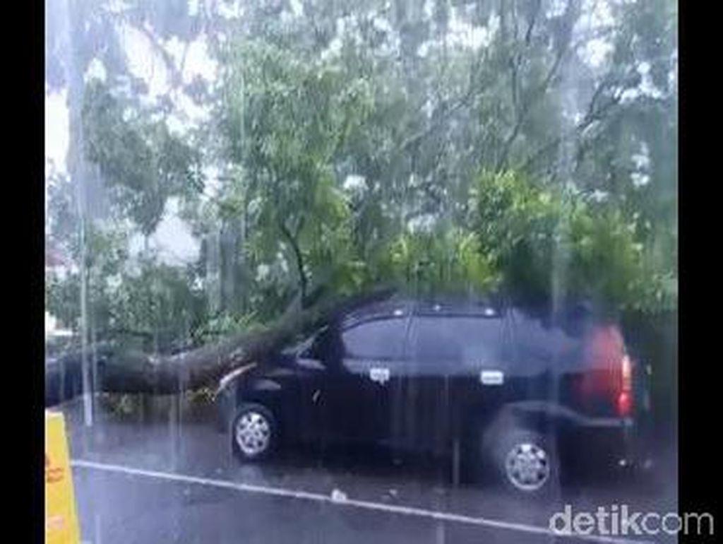 Angin Kencang Bikin Pohon Tumbang di Lumajang Timpa Mobil