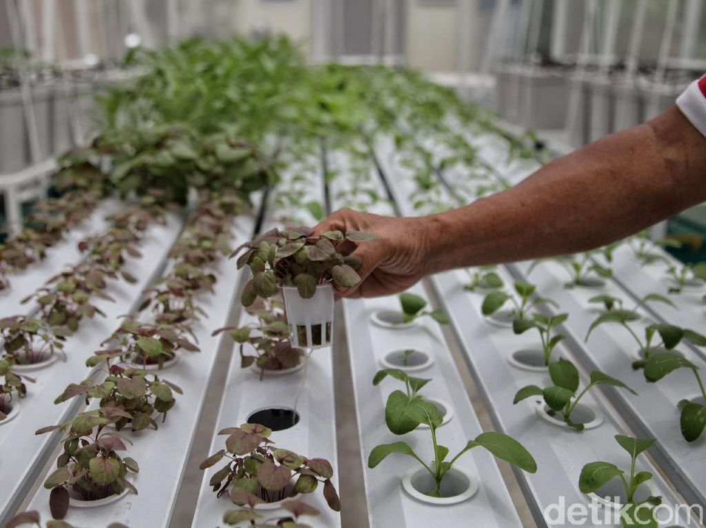 Ekspor Sektor Pertanian Oktober Tumbuh 23,8% YoY