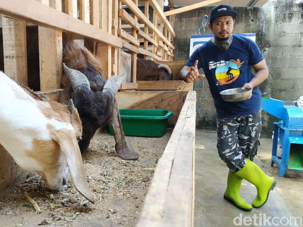 Pengusaha Kafe di Pacitan Beternak Kambing untuk Bertahan Selama Pandemi