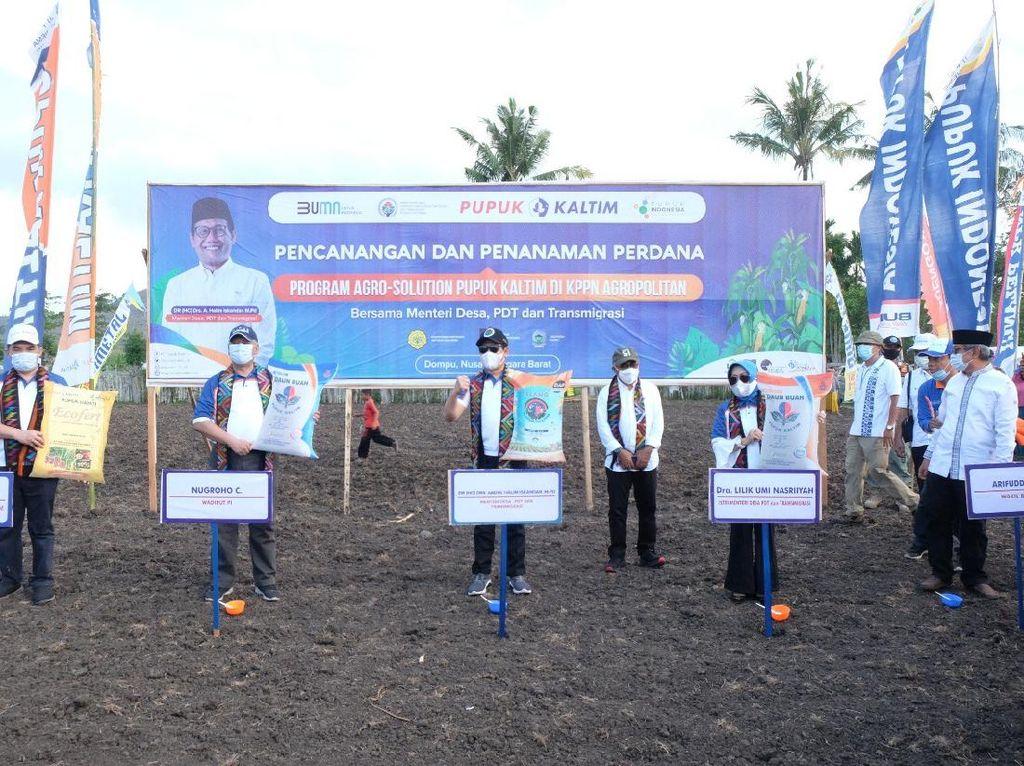 Pupuk Kaltim & Kemendes Tanam Perdana Agro Solution untuk Jagung di NTB
