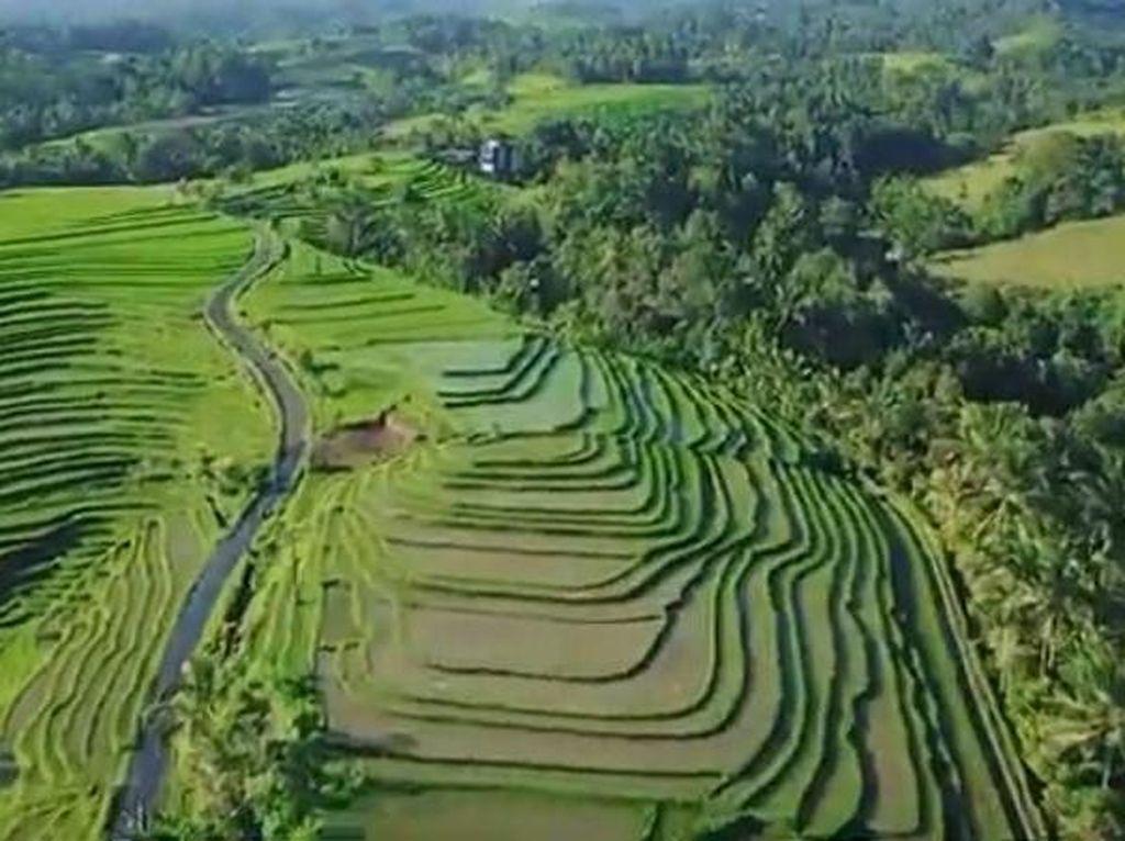 Mengintip Keindahan Desa Wanagiri Kauh di Tabanan Bali