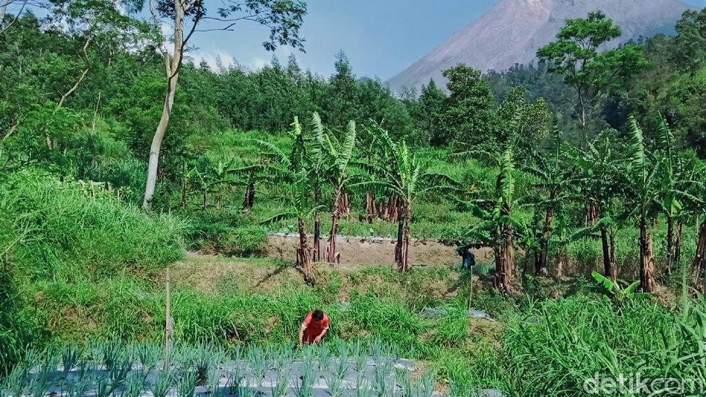 Melihat Aktivitas Warga di Kawasan Rawan Bencana Gunung Merapi