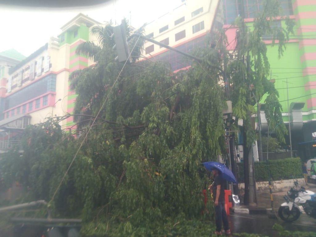 Hujan Angin, Pohon Tumbang Timpa Kendaraan di Depan PGC Jaktim