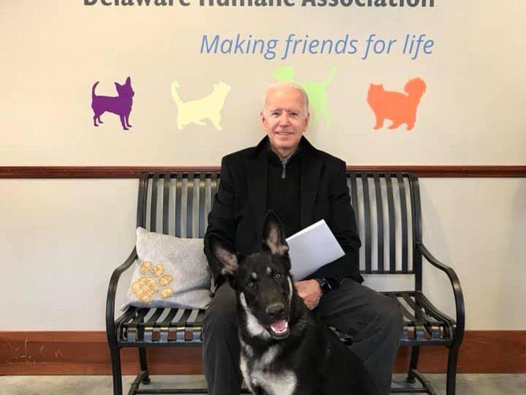 Joe Biden Bawa 2 Anjing Peliharaannya ke Gedung Putih