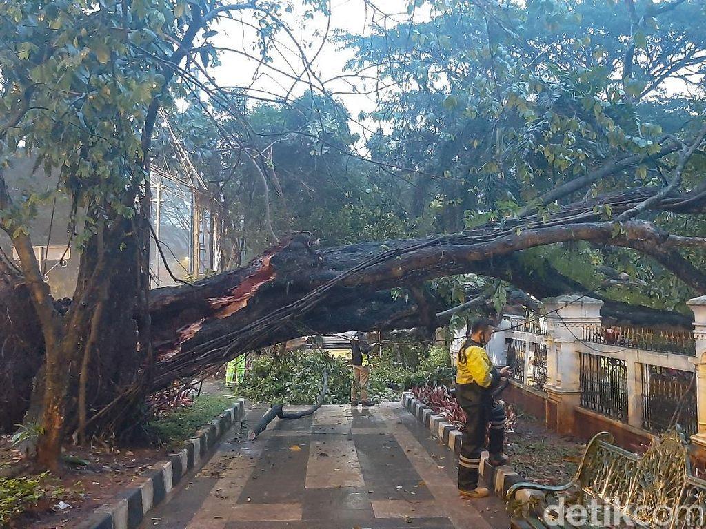 Pohon Tumbang Timpa Pagar Gedung Cagar Budaya dan Mobil di Bogor