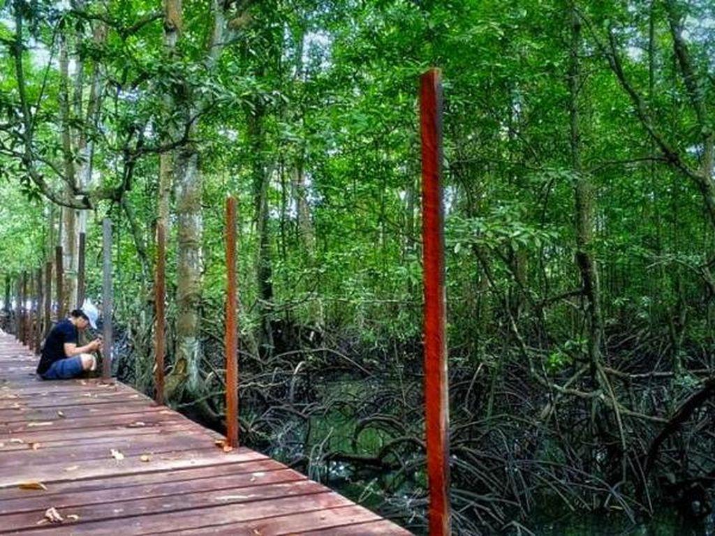 Yang Hijau-hijau di Wisata Mangrove Muara Badak
