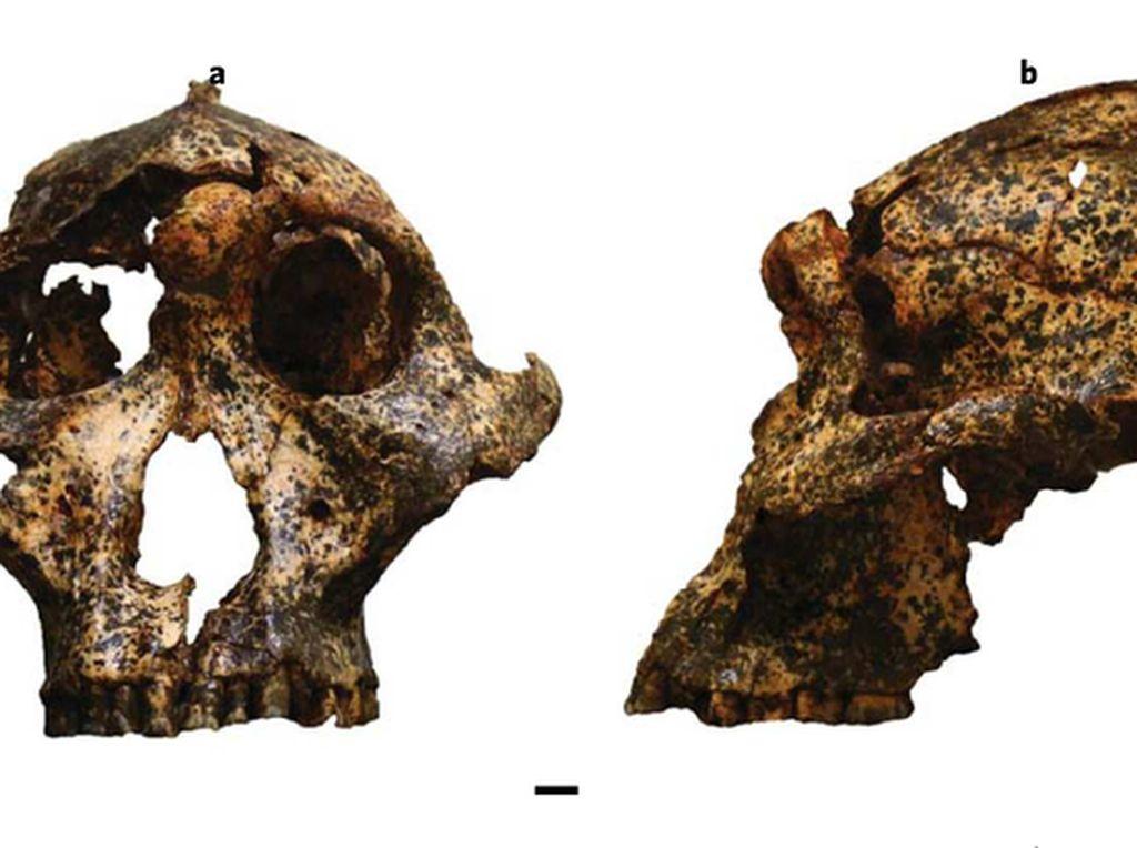 Fosil Sepupu Manusia Berusia 2 Juta Tahun Ditemukan di Afrika