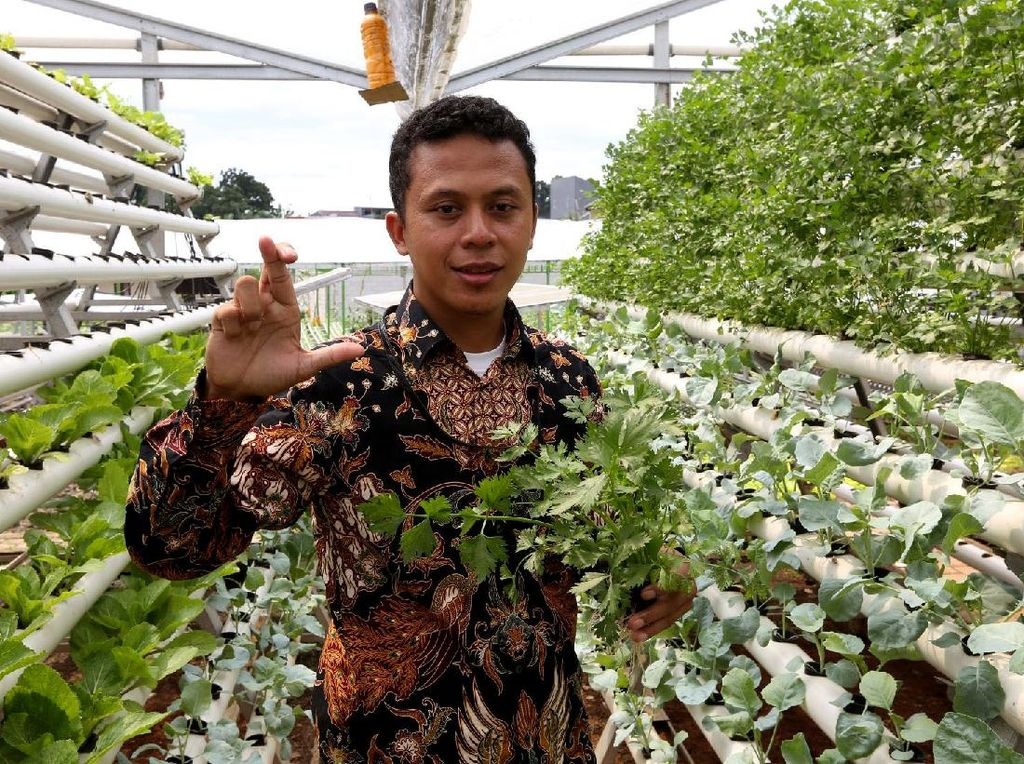 Solusi IoT untuk Urban Farming