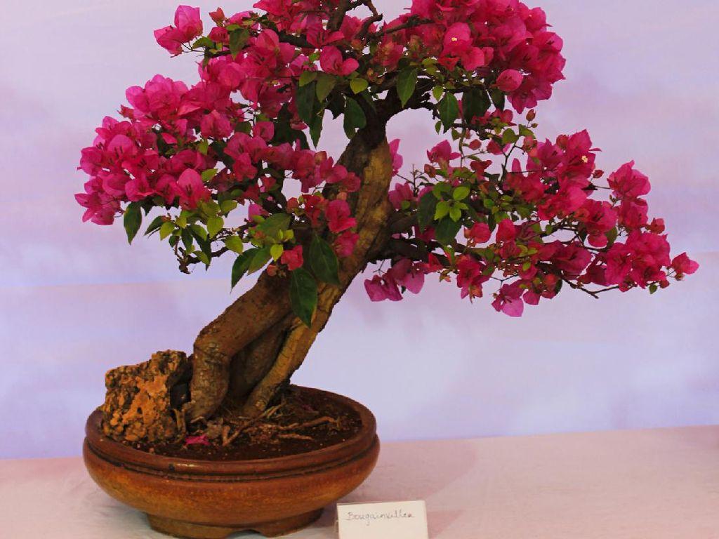10 Jenis Bonsai, Tanaman Hias dari Jepang yang Cocok untuk Dekorasi Rumah
