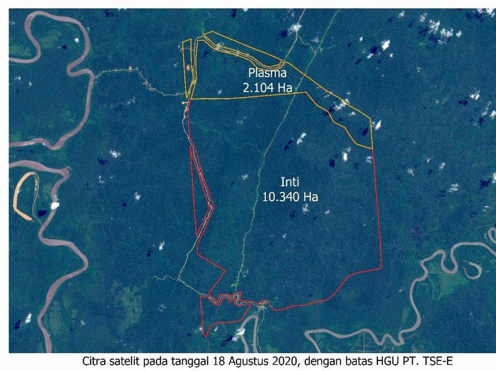 Korindo Group Bantah Sengaja Bakar Lahan di Papua untuk Perluasan Lahan Sawit