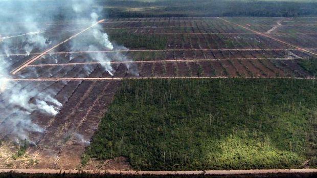 Kebakaran Hutan di Papua