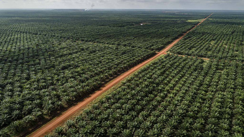 Documentation of landcover in PT Dongin Prabhawa oil palm concession, part of the Korindo group.