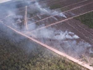 Investigasi 15 Tahun Kebakaran Hutan di Papua oleh Perusahaan Korsel