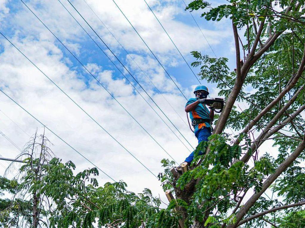 Hingga Oktober, PLN Jatim dan Bali Pangkas 72.262 Pohon Dekat Jaringan Listrik