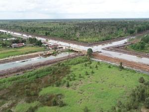 Penjelasan KLHK soal Hutan Lindung Bisa Diubah Jadi Food Estate