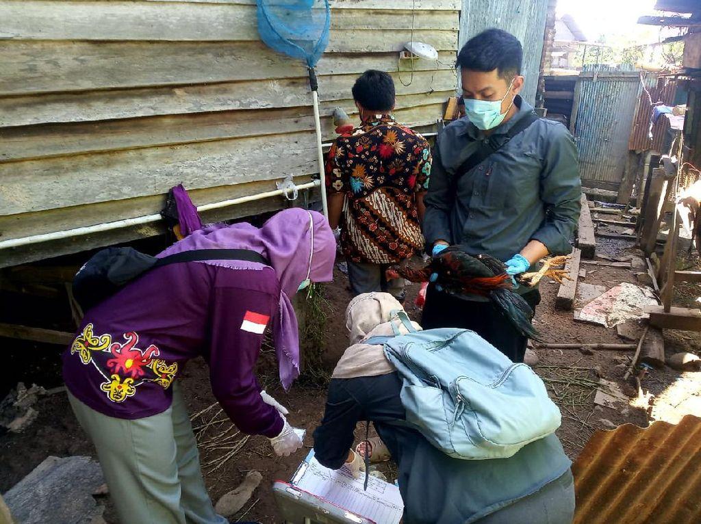 Pandemi Corona Belum Usai, Ratusan Kasus Flu Burung Ditemukan di Bontang