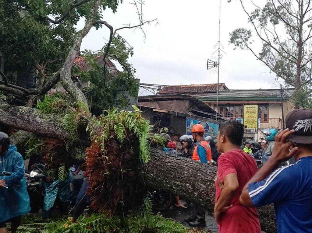Pohon Tumbang di Jalur Puncak Cianjur, Akses Jalan Tertutup-Lallin Macet