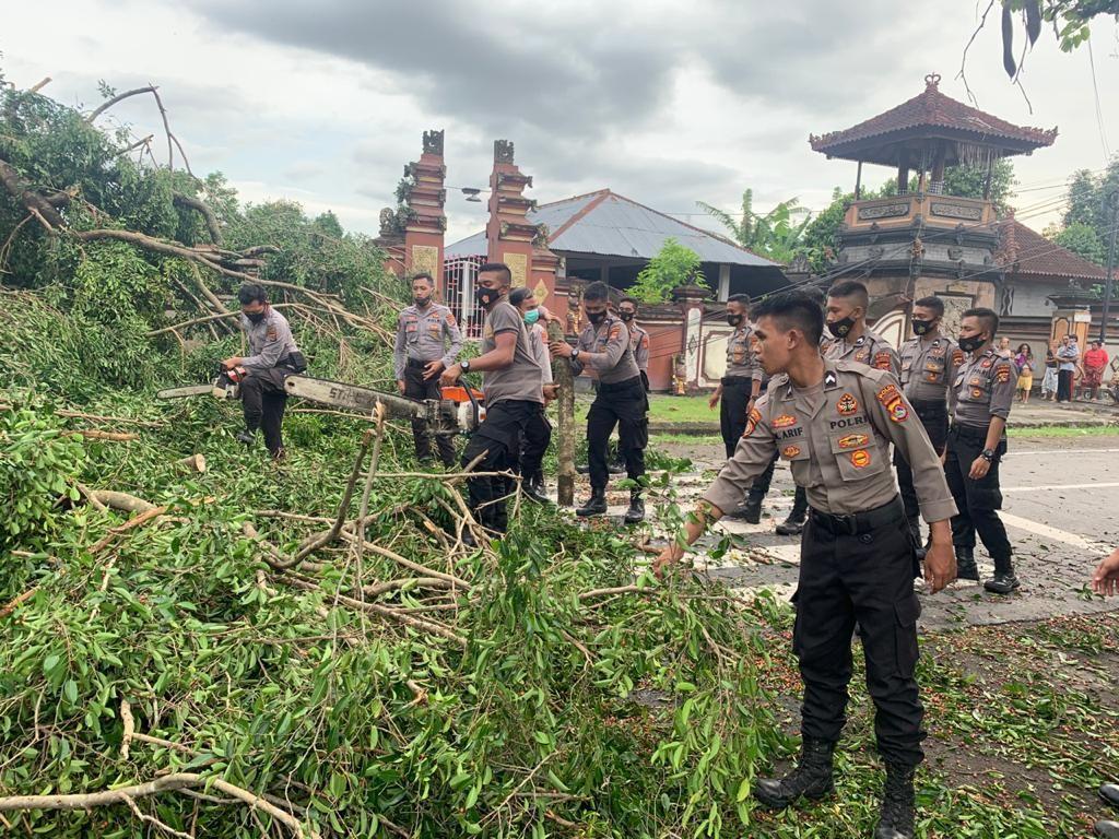 Tim Polresta Mataram Evakuasi Pohon Tumbang Akibat Angin Kencang