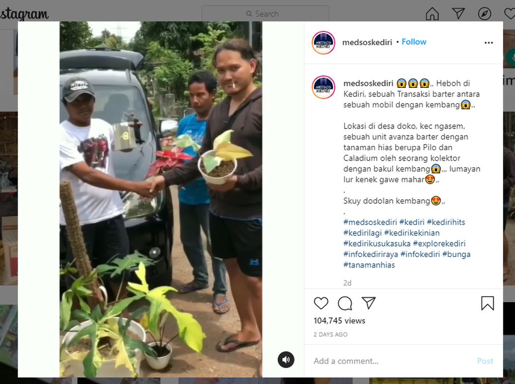 Viral Mobil Dibarter Tanaman Hias, Netizen Bilang Setingan