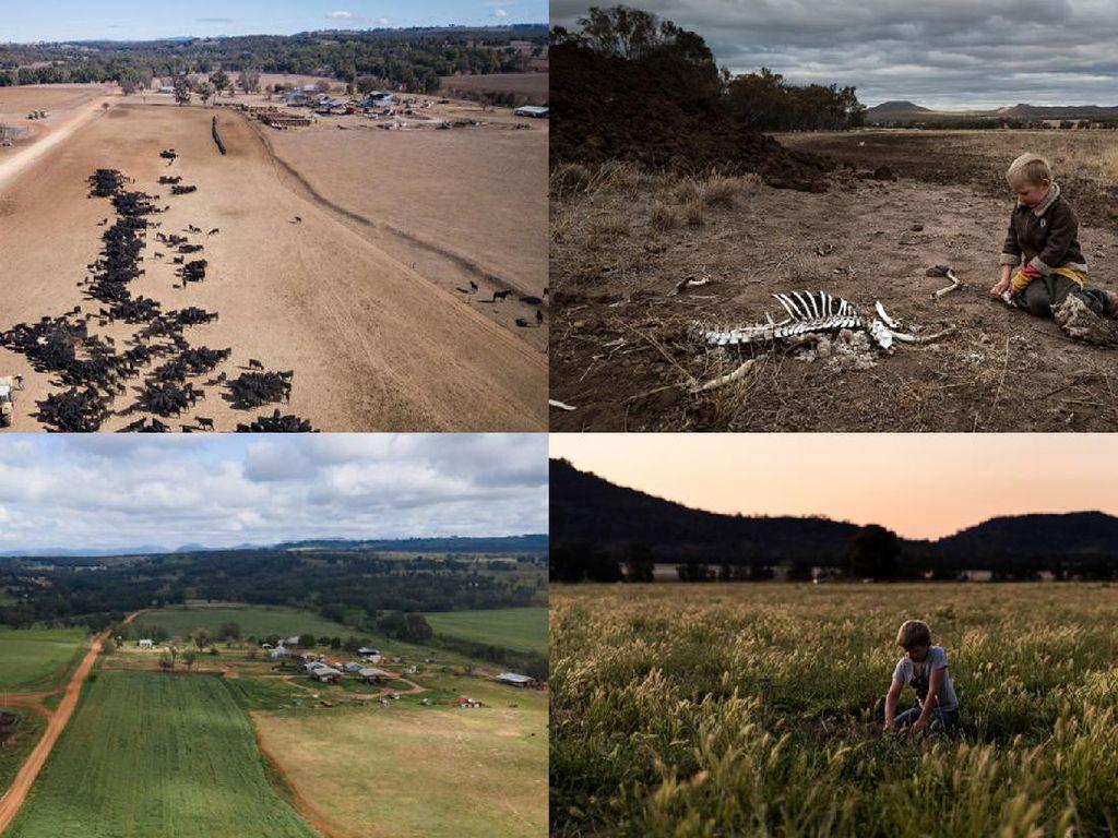 Potret Before-After Lahan Pertanian yang Pulih Dari Kekeringan