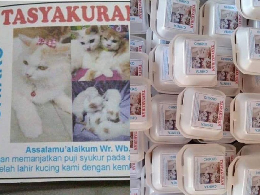 Netizen Gelar Tasyakuran Kelahiran Kucing dengan Berbagi Makanan dan Saweran