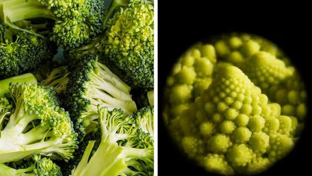 Begini Rupanya Kulit Hiu, Brokoli Hingga Rambut DIlihat Super Dekat