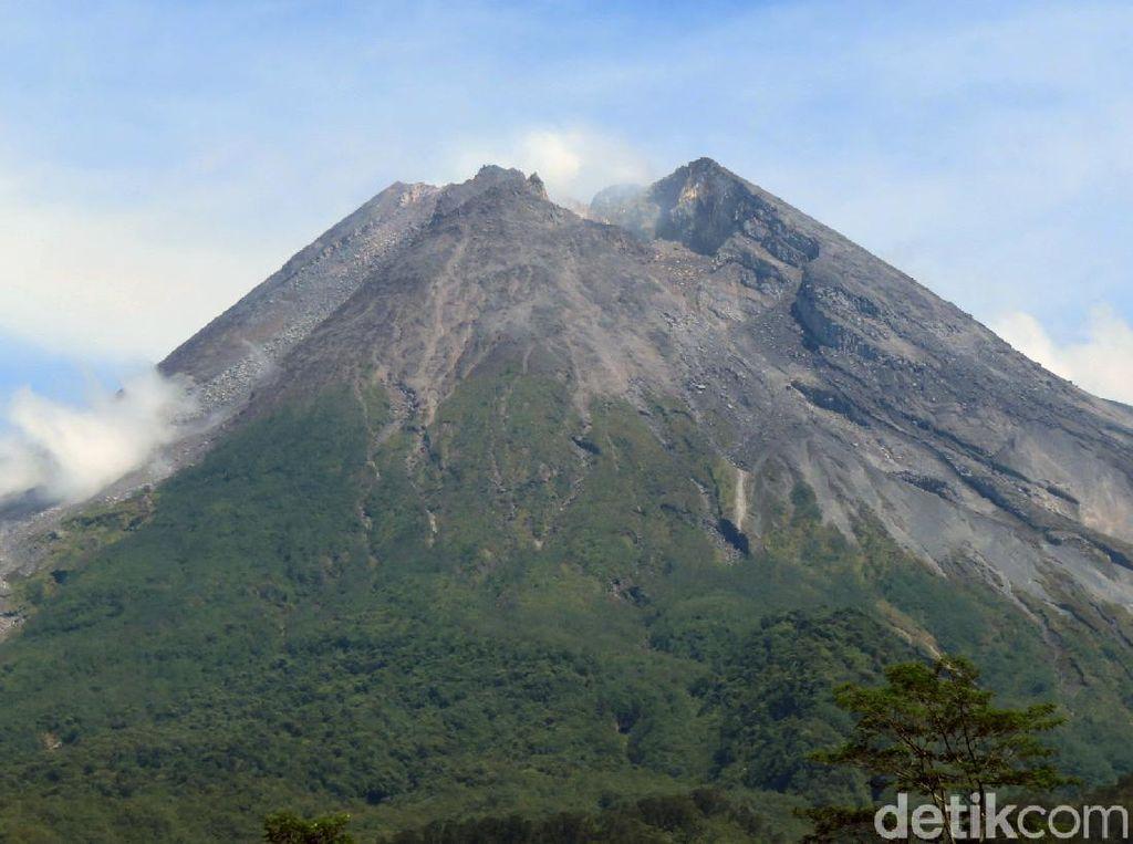Cari Macan di Gunung Merapi, TNGM Pasang Puluhan Kamera