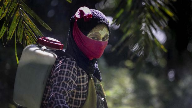 A female worker walks with a pesticide sprayer on her back at a palm oil plantation in Sumatra, Indonesia, Saturday, Sept. 8, 2018. Some workers use a yellow paste made of rice powder and a local root as a sunblock. (AP Photo/Binsar Bakkara)