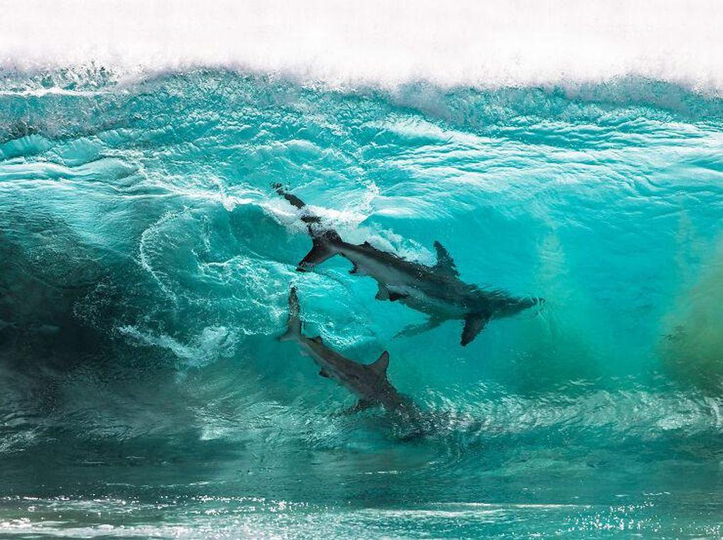 Jangan Dilihat! Karya Finalis Ocean Photography Awards Memukau Mata