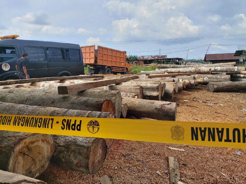 Polisi-KLHK Razia Sejumlah Sawmill di Riau, Ratusan Kayu Ilegal Disegel