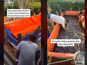 Pakai Ember dan Terpal, 5 Orang Ini Berhasil Budidaya Ikan Lele