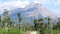 Siaga! Pagi Ini Gunung Merapi Keluarkan Asap Tebal Setinggi 250 Meter