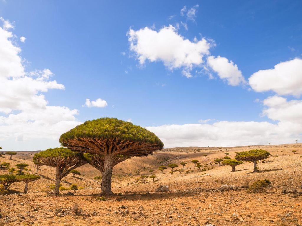 Foto Pohon Aneh di Pulau Alien yang ada di Bumi