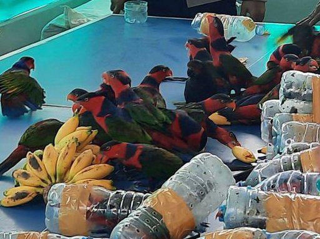Miris, 74 Ekor Burung Nuri Diselundupkan di Dalam Botol