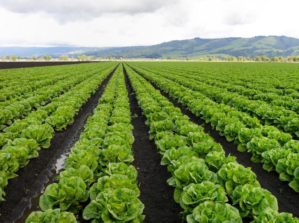 Startup Pertanian Asal Abu Dhabi Dapat Pendanaan Rp 864 M