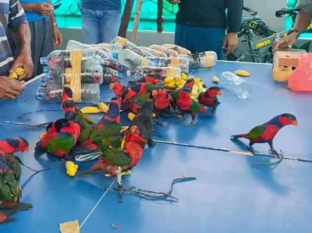Sadis! 74 Burung Nuri Diselundupkan dalam Botol dari Fakfak
