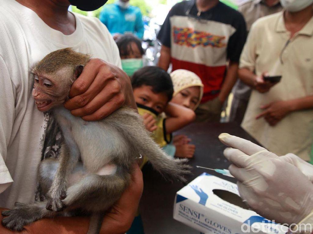 Kucing, Anjing Hingga Monyet Antri Vaksinasi Anti Rabies