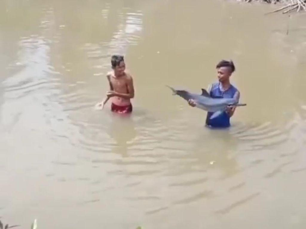 Lumba-lumba Remaja Disorientasi Ditemukan di Sungai, Ini Kata BKSDA Aceh